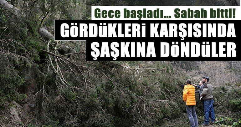 Ordu'da ağaçlar fırtınanın şiddetine dayanamadı