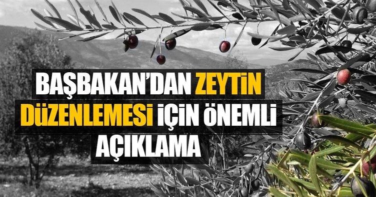 AK Parti Türkiye'yi zeytincilikte dünya ikincisi yaptı