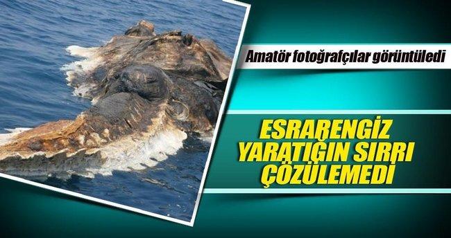 İran Körfezi'nde deniz canavarı!