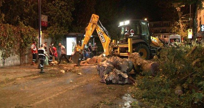 Beykoz'da yürekler ağza geldi! Tarihi çınar devrildi, sahil yolu trafiğe kapandı