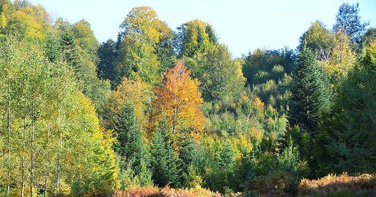 Küre Dağları Milli Parkı'nda sonbahar güzelliği
