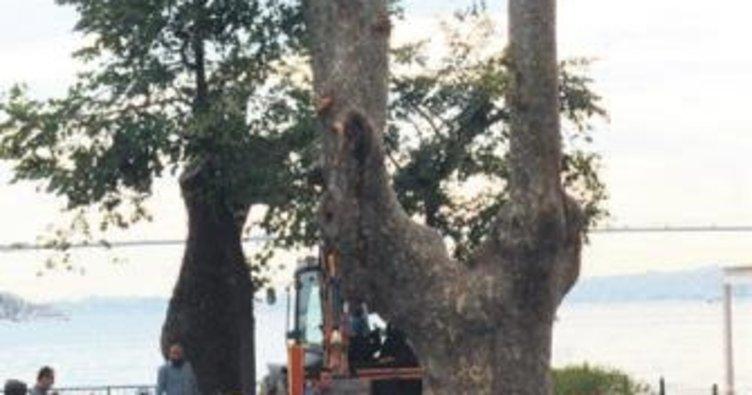 Devrilen ağaçların yerine yenileri dikiliyor