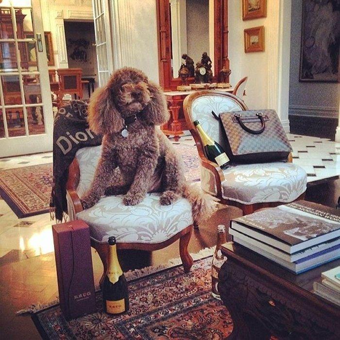 Instagram'ın zengin köpekleri