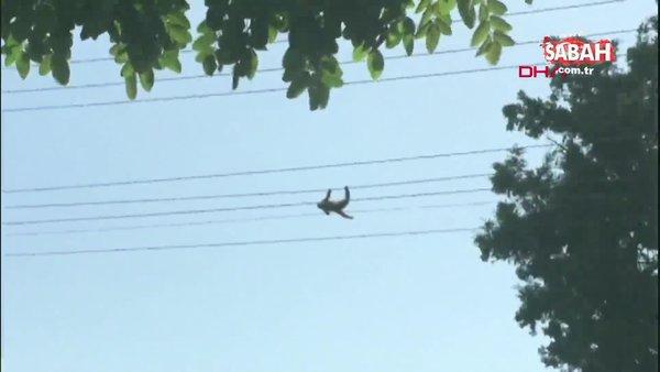 Son dakika haber... Kocaeli'de hayvanat bahçesinden kaçan maymunun feci sonu   Video