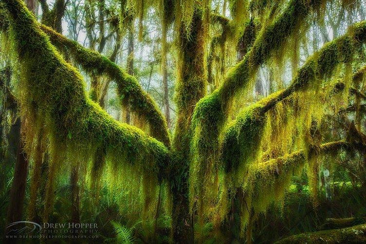 Dünyanın en fantastik ağaçları