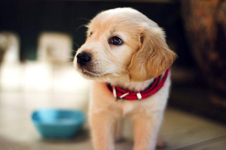 En Güzel Köpek İsimleri - 2020 Popüler Dişi ve Erkek Köpek İsimleri