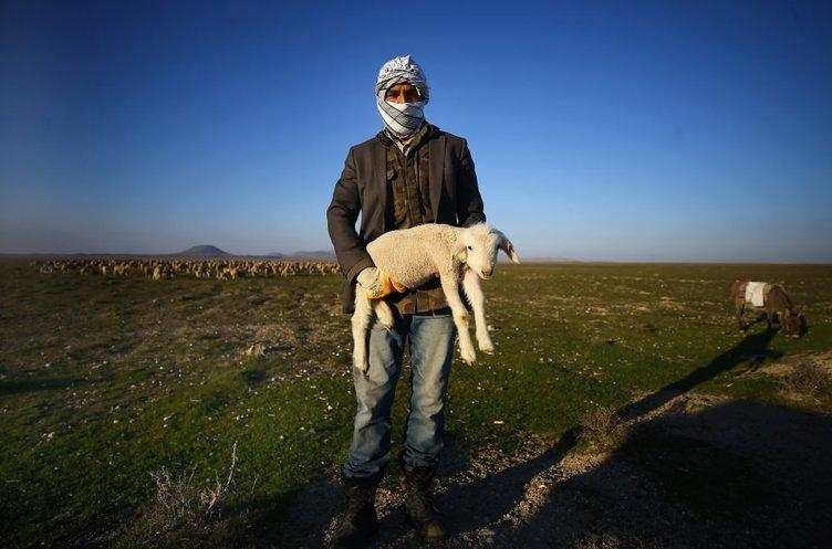 Atlı çobanların günbatımında zorlu mesaisi