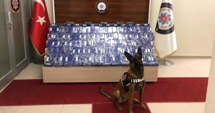 72 kilo eroini narkotik köpeği 'Zeyna' buldu