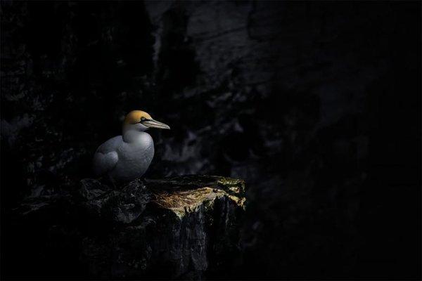 Kuş Fotoğrafçılığı Yarışmasında Kazanan 17 Etkileyici Fotoğraf