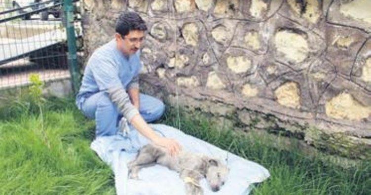 Sokak köpeğine Mehmetçik şefkati