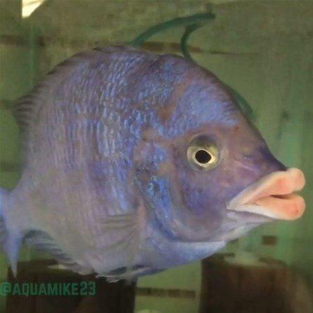 Derin mavinin garip canlıları