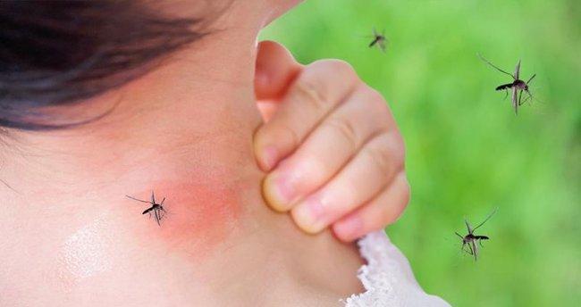 İstanbul'a sivrisinek kabusu: Sinekler ilaçlara karşı direnç kazandı