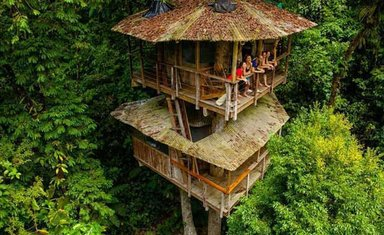 Kosta Rika'daki muhteşem ağaç oteli