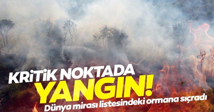 SON DAKİKA! Kızılırmak Deltası Kuş Cenneti'nde yangın