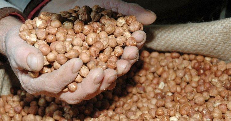 Samsun'da fındık toplama ve ihraç tarihleri belirlendi