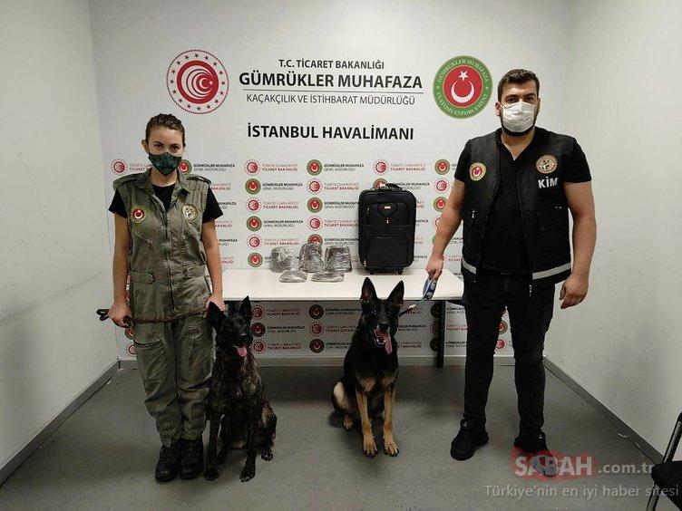 SON DAKİKA: Şüpheli yolcuyu dedektör köpeği tespit etti! İstanbul Havalimanı'nda yakalandı...