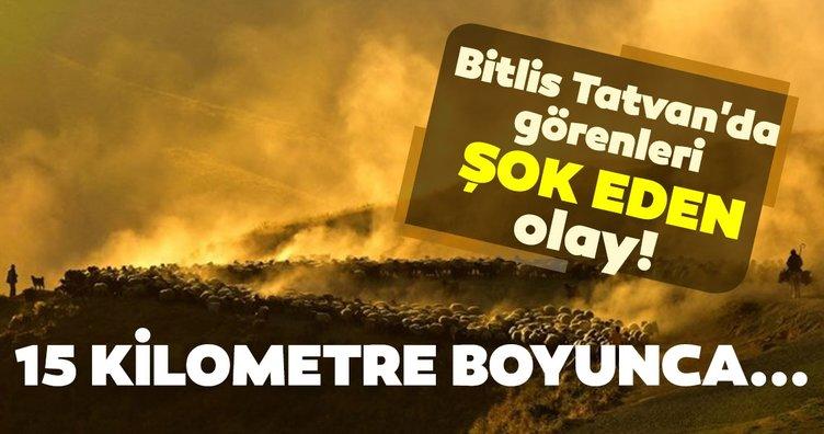 Bitlis Tatvan'da görenleri şok eden olay! 15 kilometer boyunca...