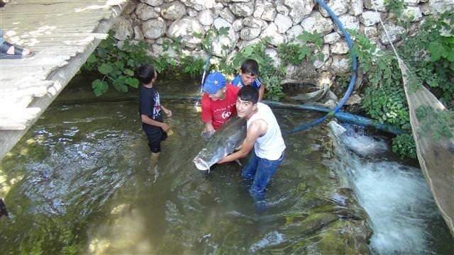 Zap Suyu'nda 60 kilogramlık balık çıktı