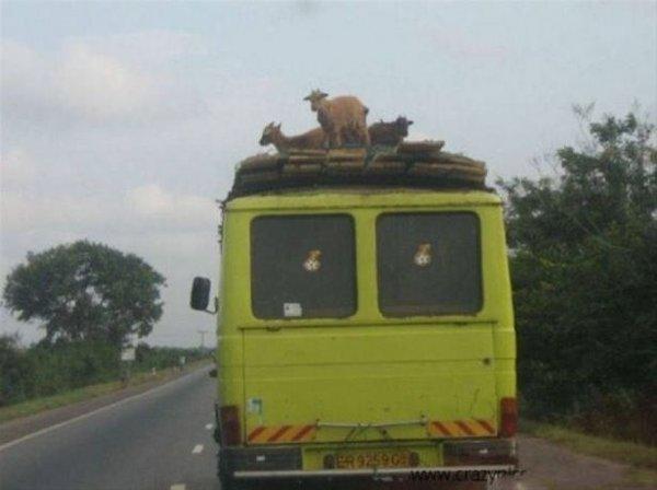 Afrika'dan ilginç kareler!