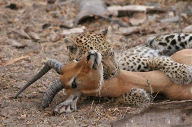 Hayvanlar dünyasından inanılmaz kareler!
