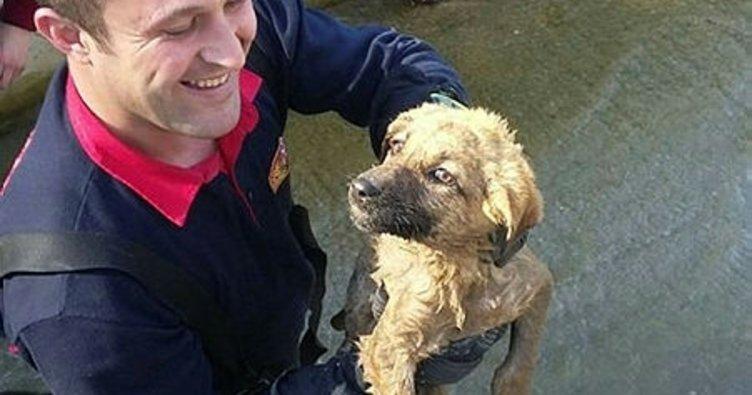 Sulama kanalına düşen köpeği itfaiye kurtardı