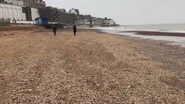 İngiltere'de binlerce deniz canlısı karaya vurdu