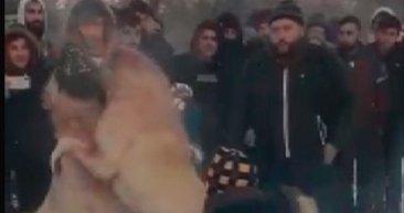 Konya'da isyan ettiren görüntüler ortaya çıktı! Aralarında çocuklar da var...