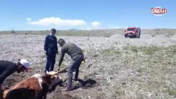 Çamura saplanan inekleri itfaiye kurtardı   Video