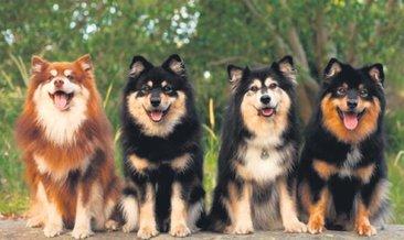 Köpekler korona testi yapacak