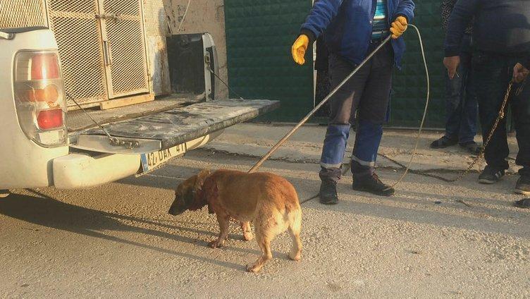 Bahçede havlayan köpeği bıçakladı