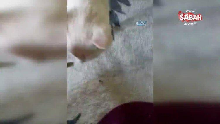 Sahibinin elinden çekirdek çitleyen kedi sosyal medyada ilgi odağı oldu