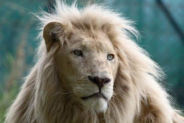 En güçlü ısırığa sahip hayvanlar