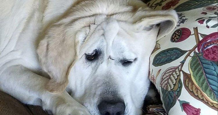 Çirkin diye terk edilen köpeğin değişimi...