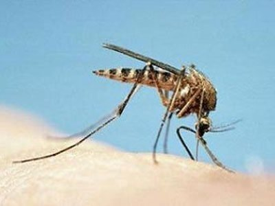 Ölümcül virüs korkutuyor