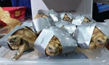 Dünyanın En Hızlı Kaplumbağası Dünya Haberleri