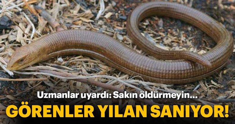 İzmir ve Aydın'da görüntülendi... Uzmanlardan çok önemli uyarı