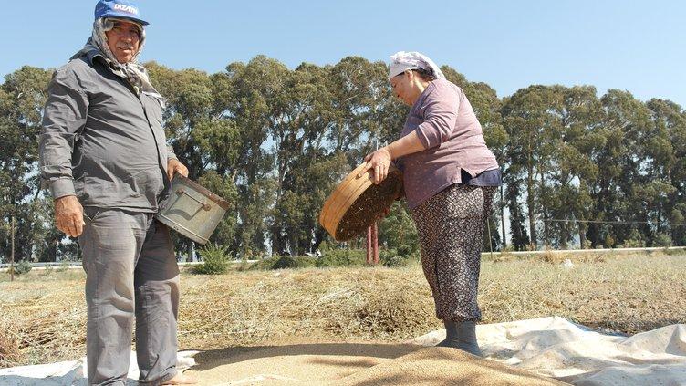 Muğla'da üretiliyor Japonların sofralarını süslüyor!
