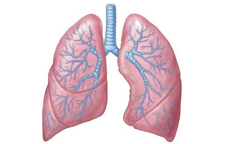 Akciğerleri yeniden doğmuş gibi temizleyen yöntem!