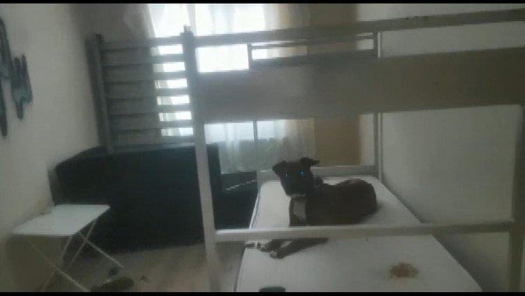 Evde köpeğine işkence eden şahıs gözaltına alındı
