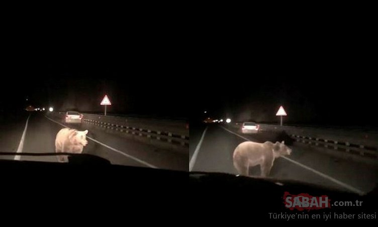 Artvin'de yola inen ayıya otomobil çarptı