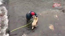Ordu'da buz gibi suda mahsur kalan çoban köpeğini itfaiye ekipleri kurtardı