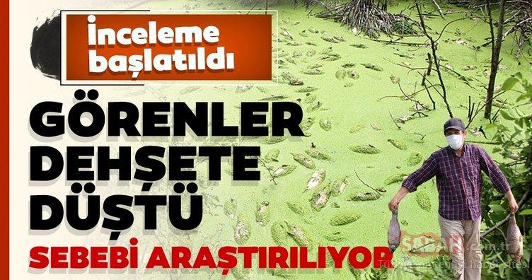 Göynük'teki toplu balık ölümlerine ilişkin inceleme başlatıldı