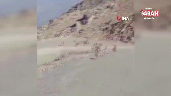 Milli Savunma Bakanlığı'ndan dağ keçileri paylaşımı   Video