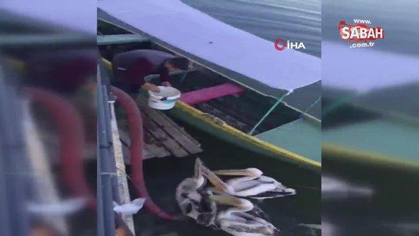 Bursa'da pelikanların balık keyfi kamerada!