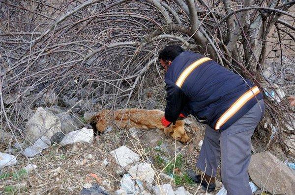 Hamile köpek dövülerek öldürüldü