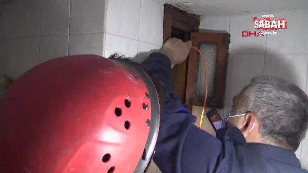 İstanbul'da fayanslar sökülerek kurtarılan martı kamerada