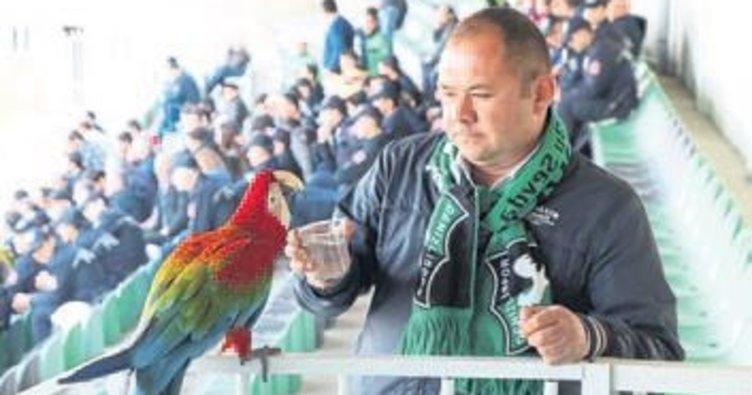 Tribünde maç izleyen papağan