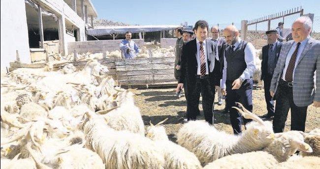Uluslararası kongre, keçi gibi inat edince iptal olmadı