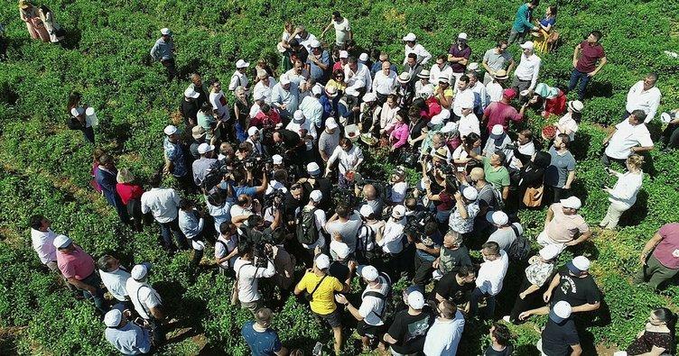 Uluslararası Gaziantep Gastronomi Festivali  biber hasadı ile başladı