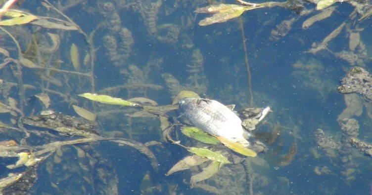 Antalya'da çevre felaketi! Balık ölümleri şoke etti